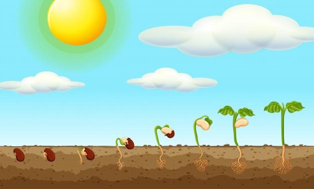 7 ایده برای کسب درآمد از فروش آنلاین گل و گیاه